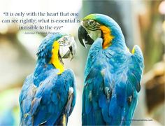 """""""It is only with the heart that one can see rightly; what is essential is invisible to the eye"""" ~Antoine De Saint-Exupery Valentine's Day Quotes, Love Quotes, What Is Essential, Inspirational Quotes About Love, Quote Of The Day, Eye, Words, Heart, Pictures"""