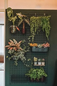 - My Plant Wall, Update 2 – Plants – update -My Plant Wall, Update 2 - Plants - Update . - My Plant Wall, Update 2 – Plants – update - Room With Plants, House Plants Decor, Plant Decor, Plants On Walls, Plants In Bedroom, Plants In The House, Bedroom Decor, Bedroom Green, Bedroom Ideas
