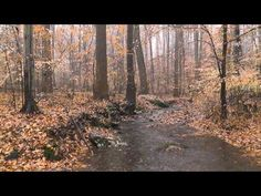▶ Relaxing HD Nature Scene #2 - Rain Sounds, Woodland Ambiance, Trickling Streams - Late Fall 2011 - YouTube