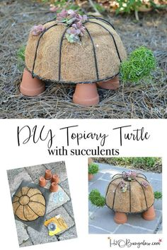 Topiary Schildkröte mit niedlichen Sukkulenten
