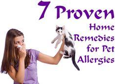 Home Remedies for Pet Allergies include: Butterbur, Essential Oils, Nasal Irrigation, Apple Cider Vinegar, Probiotics, Stinging Nettle and Querticin.