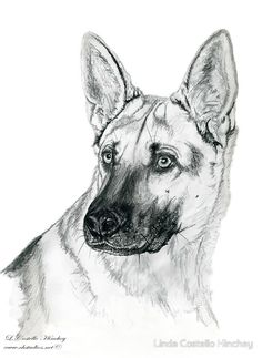 This young German Shepherd, named Fuzzy, was just over two when I was commissioned to do this portrait. He was a scary dog that was tearing at the fence to get to us but he was oddly afraid of my camera. When I got it out he ran and hid! It took a zoom lens to photograph him for this portrait. This is a graphite sketch on 11″ × 14″ 400series medium 80lb. drawing paper. By Linda Costello Hinchey of SW Virginia exclusively from the fine art studios of CHSTUDIOS.NET from a portrait commission.