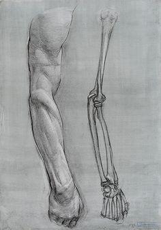 Hình vẽ nghiên cứu giải phẫu của sinh viên Nga - How To Draw Library