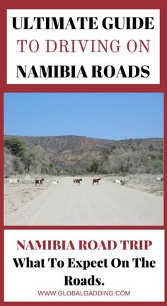 Are you planning a Namibia Road Trip and want advice on the types of roads, road conditions etc? Read this ultimate guide about what to expect here at http://www.globalgadding.com/namibia-road-trip/