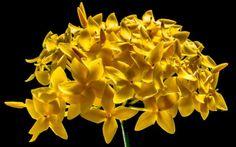 New free stock photo of nature flowers yellow