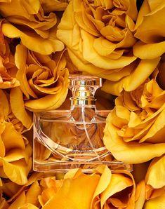 mustard color, mustard, roses, perfume, flowers