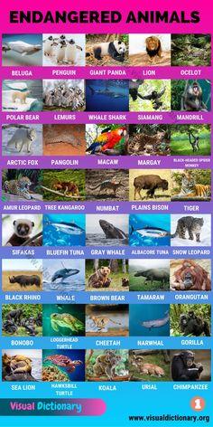 English Vocabulary Words, Learn English Words, English Grammar, English Language, English Writing, English Study, English Lessons, Animals Name In English, Amur Leopard