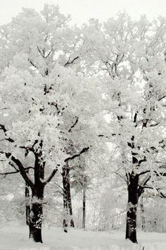 winter beauty #winter #beautiful #snow