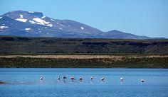 Parque Nacional Laguna Blanca  Áreas protegidas  Subsecretaría de Turismo de Neuquén