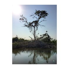 """""""Santuario del manatí"""" Reserva ecológica de aves, PLAYAS DE CATAZAJA, CHIAPAS.        M E X I C O"""