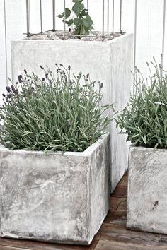 Stackars lilla ynkliga humle, än så länge alldeles liten och klen... Den har fått ett ordentligt bo att växa och frodas i. Och jag är gan... Beautiful Interior Design, Plant Combinations, Concrete Planters, Secret Garden, Garden Inspiration, Exterior