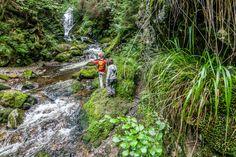 Kann man von zu viel Wasser einen Rausch kriegen? Man kann! Denn die Schwarzwälder Wasserfälle sind vielleicht klein, deren Schönheit dafür aber umso berausc...