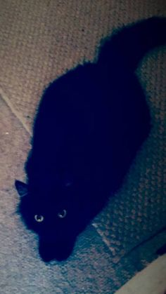 Boo Boo kitty, sent in by Renee Fichtner: