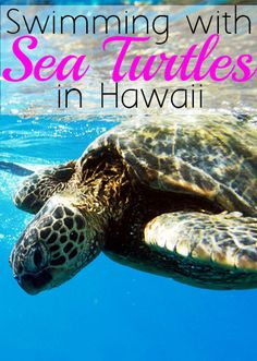 Want to go swimming with sea turtles and dolphins in Hawaii? Well then I know a place you may like...