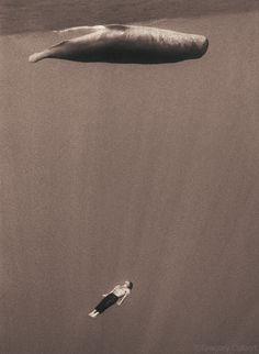 Instead of looking down at a captive whale in a concrete tank at Sea World, wouldn't it be better to imagine ourselves looking up at a whale as it passes above us free in the immensity of the ocean? Gregory Colbert