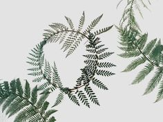 Fern wreath by Sarah Winward. Style: Rustic. Mood: Whimsical, Natural, Casual.