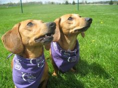 Bark for Life helps American Cancer Society.