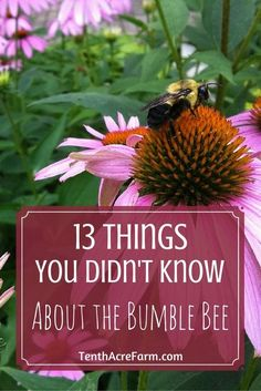 Bumble bees are an important part of the ecosystem. They are essential pollinators of food crops, trees, and flowers. Have you ever wondered what their life cycle is like or if they sting? Here are 13 facts about the bumble bee.