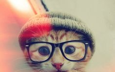 And now I introduce... Hipster Kitten.