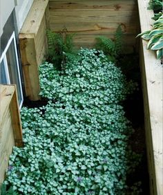 Window Well Design Ideas, Pictures, Remodel, and Decor.not sure I could get this to grow in our office window well but it would be nice. Basement Window Well, Basement Windows, Basement Steps, Sunroom Windows, Window Plants, Egress Window, Garden Windows, Basement Renovations, Window Design