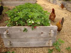 8 Awesome Raised Bed Ideas