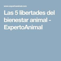 Las 5 libertades del bienestar animal - ExpertoAnimal