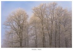 FROZEN TREES by Norbert Reimer on 500px