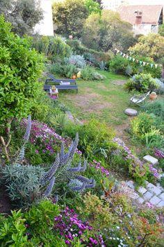 °°Dans mon jardin...°°