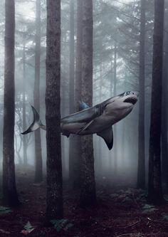 Imaginons un instant comment les forêts seraient effrayantes si les requins nageaient à travers les arbres.