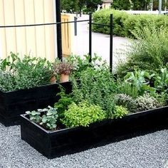 Raised Vegetable Garden Beds Can Be A Great Gardening Option Veg Garden, Garden Beds, Garden Chairs, Garden Art, Outdoor Planters, Outdoor Gardens, Black Planters, Exterior, Plantar