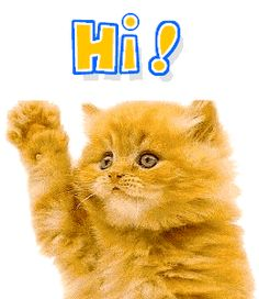 The perfect Cats Wave Hello Animated GIF for your conversation. Discover and Share the best GIFs on Tenor. Rudyard Kipling, Gif Animé, Animated Gif, Gifs, Bye Gif, Waving Gif, How To Say Hello, Gato Animal, Bold And The Beautiful