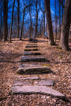 Trail Staircase, Yellow Creek Park Owensboro, Kentucky
