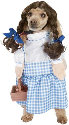 ok, so if this is Dorothy, where is TOTO?