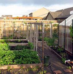 How-To grow a veggie garden even in the desert