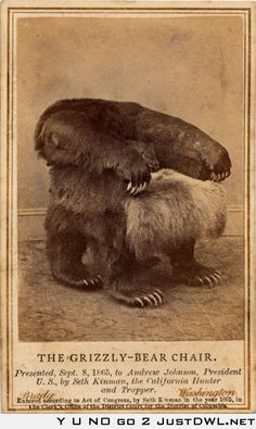 Grizzly Bear Chair for President Andrew Johnson