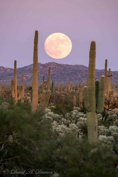 Super Moon over Arizona 2016