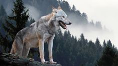 BEST COPYRIGHT FREE MUSIC Names That Mean Wolf, Types Of Wolves, Forest And Wildlife, Timberwolf, Megalodon, Mountain Photos, Wild Dogs, Gods And Goddesses, Spirit Animal