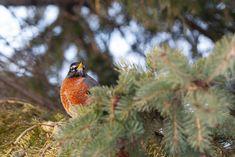 21 Mars, Bird Feeders, Marie, Outdoor Decor, American Robin, Animaux, Home, Teacup Bird Feeders