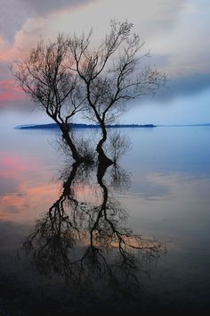 "live-2-learn: ""two barren trees """