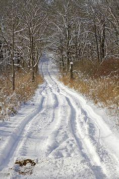 Winter - Yankee Springs, Michigan