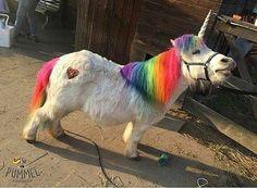 little unicorn Pony Power Real Unicorn, Baby Unicorn, Cute Unicorn, Unicorn Horse, Rainbow Unicorn, Cute Horses, Horse Love, Beautiful Horses, Mini Horses