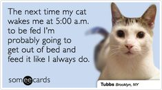 The next time my cat wakes me at 5:00 a.m. to be fed I'm probably going to get out of bed and feed it like I always do.