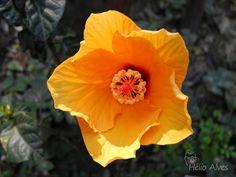 Amarelo    -   Yellow