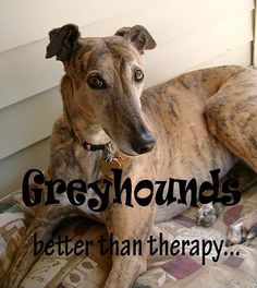 GREYHOUNDS - better than therapy <3