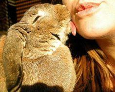 rabbit kiss !