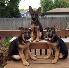 What do you suppose these three are getting into today?