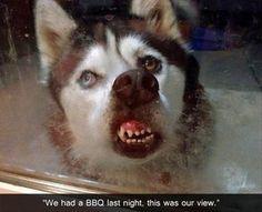 Rocket Dog: Antelope   BRANDOS.no   Sko, Rock, Dogs
