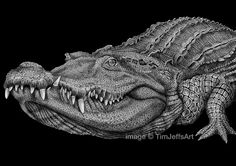 Crocodile Ink Drawing by TimJeffsArt on Etsy, $50.00