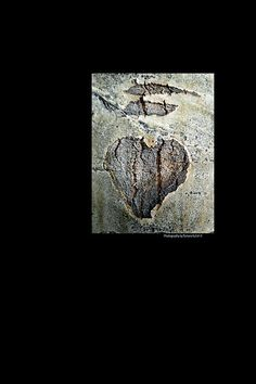 Hearts aren't just for Valentine's Day! You don't have to carve up a tree to show you love someone, are a romantic, or that you care! Here's a great heart I found hidden on one of the Aspen Trees high above Santa Fe, New Mexico!