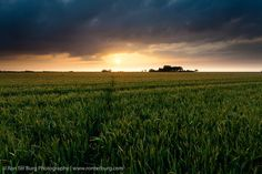 Barley field at sunset - the netherlands